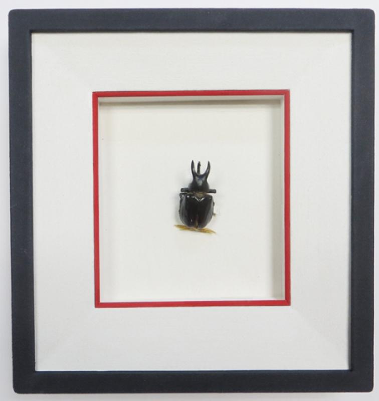 Rahmung Käfer Objektkästen für Bilder