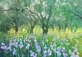 Iris und Olivenbäume